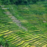The Banaue Rice Terraces in Philippines.